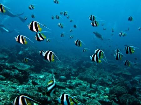 Pulau Bunaken13