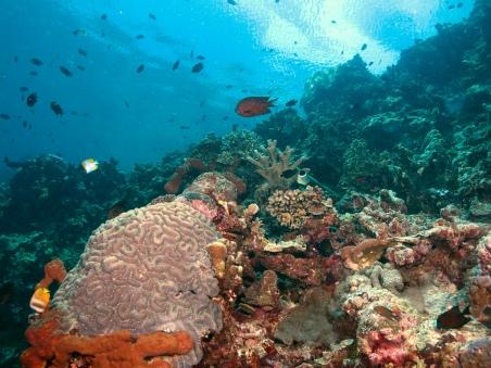 Pulau Bunaken6