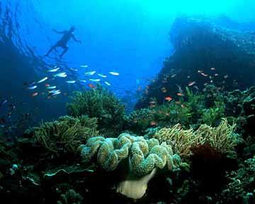 Pulau Bunaken9