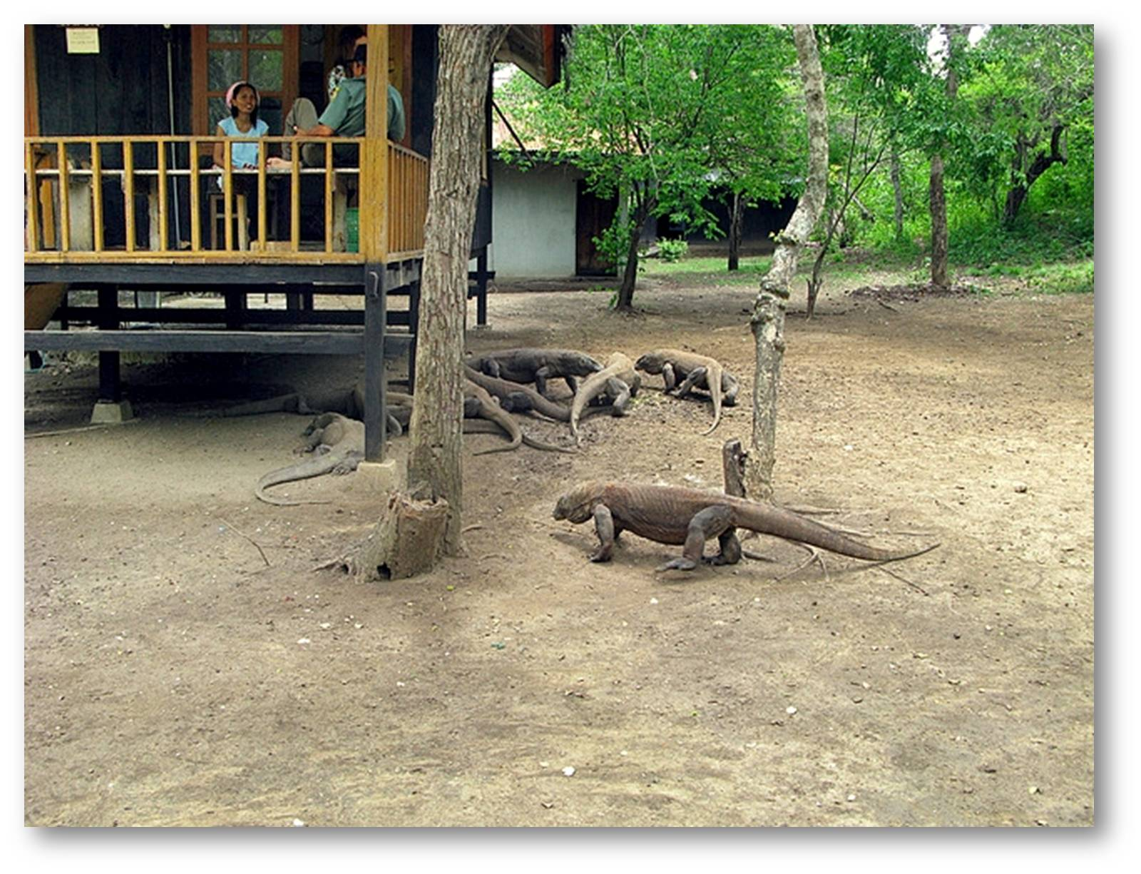 Komodo Island | Indonesia Tourism