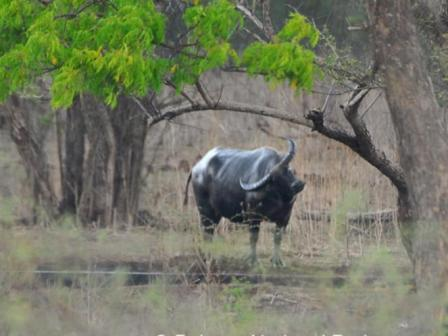 Baluran National Park11