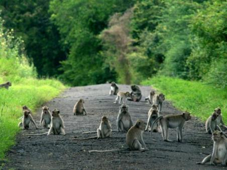 Baluran National Park4