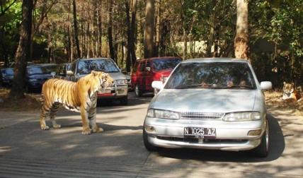 Safari Park1
