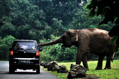 Safari Park10