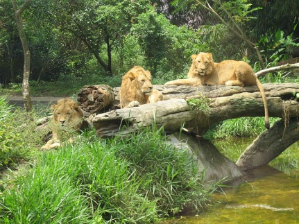 Safari Park12