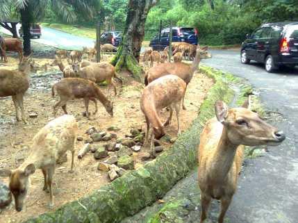 Safari Park2