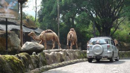 Safari Park3