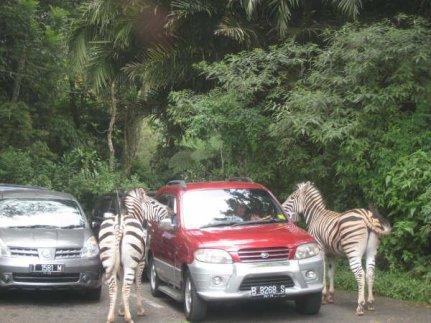 Safari Park5