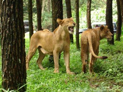 Safari Park6