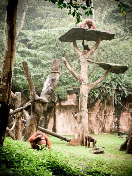 Safari Park8