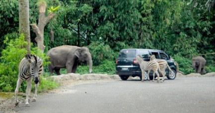 Safari Park9
