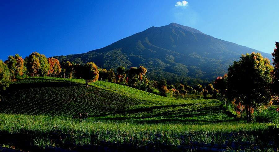 Kerinci Seblat National Park | Indonesia Tourism