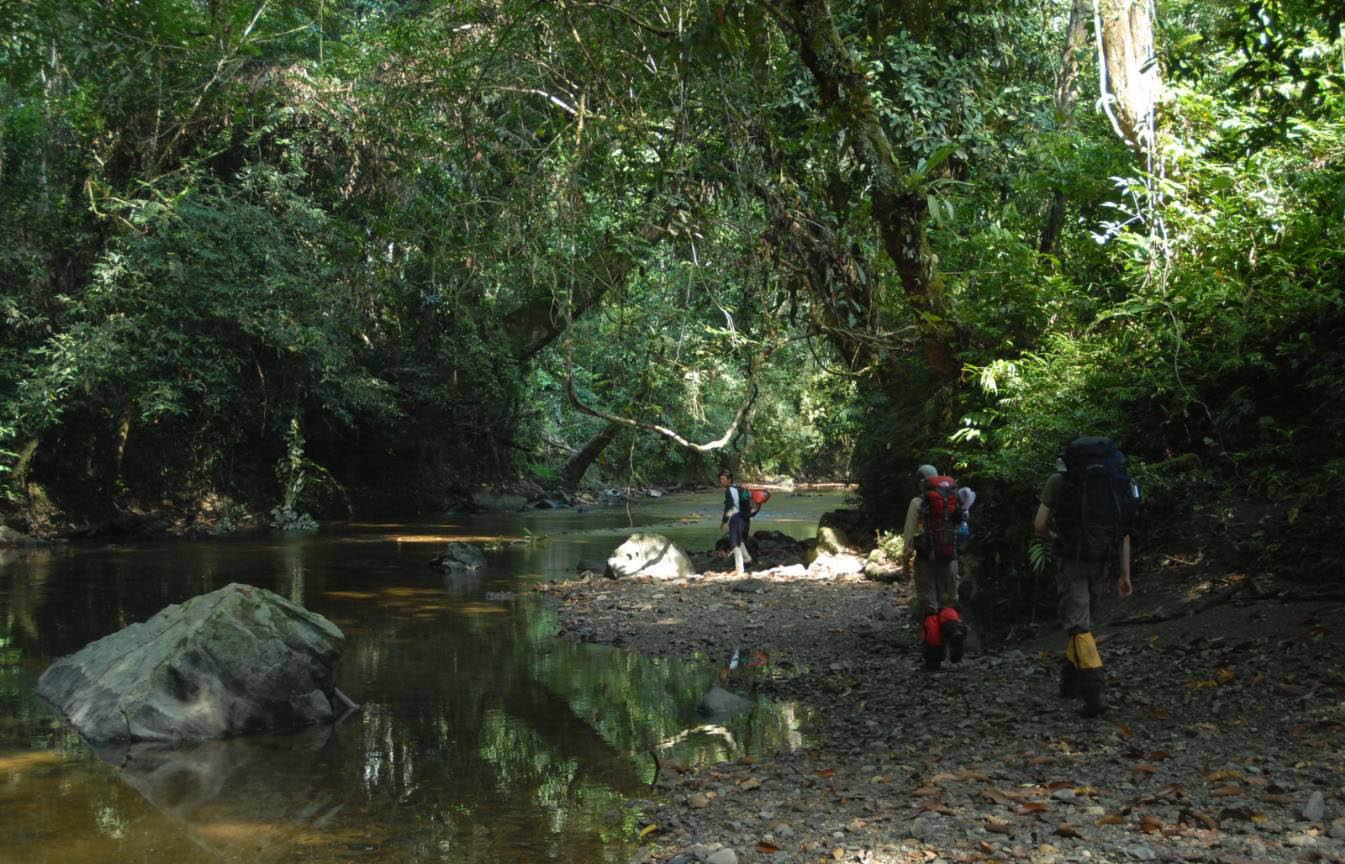 Category:Tanjung Puting National Park